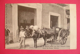 Cuba Havana Post Card Mule And Cart Carro De Carga Mula Joli Plan  Editeur Betancourt N°13 Dos Scanné - Other