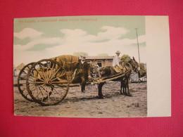 Cuba Post Card Mules Mulas  The Volanta A Confortable Native Vehicle Attelage Joli Plan  Sans Editeur Dos Scanné - Other