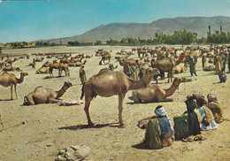Afghanistan - Stockyard Ghaznee , Camel 1971 Nice Stamps - Afghanistan