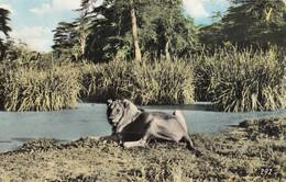 Sudan - Lion 1963 - Sudan