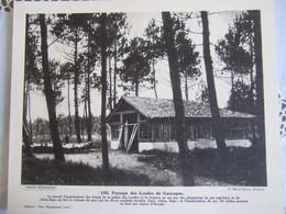 PAYSAGE DES LANDES DE GASCOGNE / CLICHE MARCEL DELBOY / 30X24 CM/ N°155 - Géographie