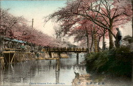 Japan -  Tokyo - Cherry Blossoms Yedo River -  - 1910 - Unclassified