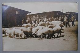 Allemagne Carte Photo Meschede Lagen Camp De Poilus Prisonniers Les Cochons WW1 1914/1918 - Altri