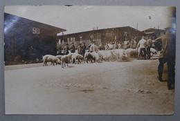 Allemagne Carte Photo Meschede Lagen Camp De Poilus Prisonniers Les Cochons WW1 1914/1918 Deuxiéme Carte - Altri