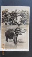 CPSM - Ceylan - Baby Elephant At Katugastot River, Kandy - Sri Lanka (Ceylon)