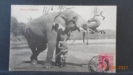 CPA - Ceylan Elephants - Sri Lanka (Ceylon)