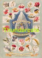 CHROMO IMAGE MURRAY & LANMAN FLORIDA WATER LANGUAGE OF FLOWERS LANGAGE DES FLEURS 1899 - Other