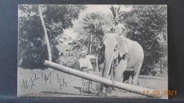 CPA - Ceylan - Elephant At Work - Sri Lanka (Ceylon)