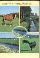 Nederland Holland Pays Bas Hellendoorn Met Paarden En Koeien - Hellendoorn