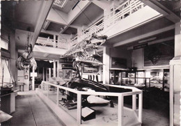 64 -  BIARRITZ - Musée De La Mer - Galerie D Exposition - Biarritz