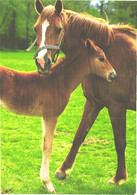 Horses, Standing Horse With Foal - Horses