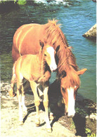 Horses, Standing Horse With Foal Near Water - Horses