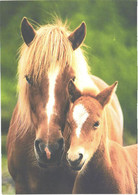 Horses, Horse With Foal - Horses