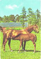 Horses, Horse Feeding Foal - Horses
