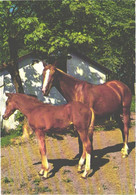 Horses, Standing Horses In Front Of Building - Horses