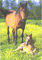 Horses, Standing Horse And Foal On Grass - Horses