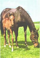 Horses, Eating Horse, Standing Foal - Horses