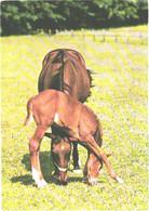 Horses, Eating Horse And Foal - Horses