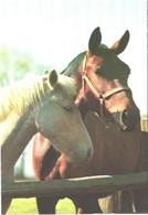 Horses, Standing Horses - Horses