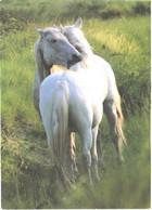 Horses, Hughing White Horses - Horses