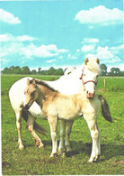 Horses, Standing White Horse And Foal - Horses