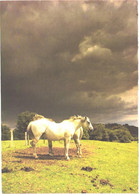 Horses, Standing White Horses And Thunder Clouds - Horses