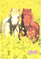 Horses, Standing Horses In Deep Grass - Horses