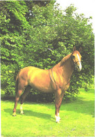 Horses, Standing Horse - Horses