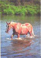 Horses, Walking Horse In Water - Horses