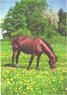Horse, Eating Brown Horse - Horses