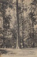JUPILLES Forêt De Bercé Chêne Le Chêne Boppe - Other Municipalities