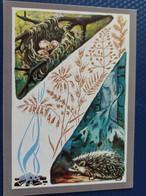 "OLD Postcard  - ""Hedgehog In Russian Forest"" -   1980s - Hérisson - Igel - Zonder Classificatie"