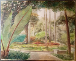 Forêt El Cavario Caracas, H. Hans, 1951/ Forest El Cavario Caracas, H. Hans, 1951 - Olii