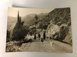 GREECE  - 1965 - LEFKAS - LEFKADA  - Return From The Field -  POSTCARDS - Grecia