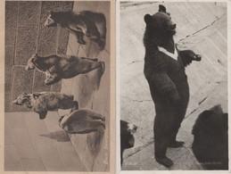 Bear Begging At Dublin Zoo Irish Creased Real Photo 2x Postcard - Orsi
