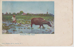 CPA Philippines - Manila - Plowing Rice Fields(très Jolie Scène) - Philippines