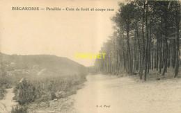 40 Biscarrosse, Parallèle, Coin De Forêt Et Coupe Rase, Carte Pas Très Courante - Biscarrosse