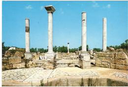 CANOSA Di PUGLIA  (BARI) - Ruderi Di San Leucio - 1996 - Bari