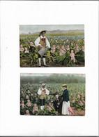Carte Postale Ancienne Bébés Dans Des Choux 2 Cartes - Babies