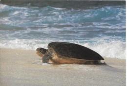 Cp île Tromelin Femelle De Tortue Franche Montant à Terre Pour Pondre - Turtles