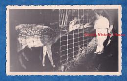 Photo Ancienne Snapshot - Parc à Situer - Belle Interaction Entre Un Daim & Un Enfant - Animal Zoo - Lugares