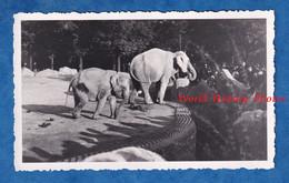 Photo Ancienne Snapshot - Zoo à Situer - Parc D' éléphant - Ombre Des Visiteurs - Animal Lumiére - Lugares