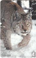 BULGARIA(chip) - Felis Lynx, Mobika Telecard 100 Units(type 1), Tirage 20000, 01/00, Used - Non Classificati