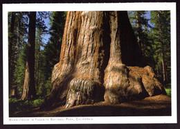 AK 000874 USA - California - Yosemite National Park - Mammutbaum - Yosemite