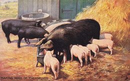 R612821 Making Hogs Of Themselves. Tuck. Oilette. 9397. 1907. Simple Life - Monde