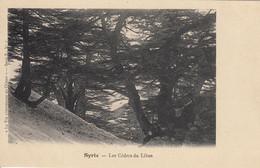 SYRIE - LES CEDRES DU LIBAN - Syria