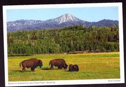 AK 001184 USA - Wyoming - Bisons Im Grasland Vor Dem Grand Teton - Other