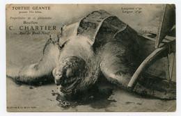 Tortue Géante Pesant 350 Kgs Propriétaire De Ce Phénomène Bouillon C. Chartier - Turtles