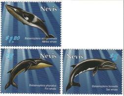 Nevis - 2010 - Whales - Yv 2131 + 2133/34 - Balene