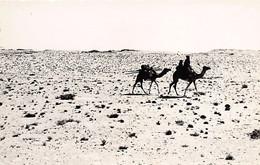 Mauritanie - PORT-ETIENNE Nouadhibou - Chamelier Maure - Ed. Najim 10 - Mauritanie
